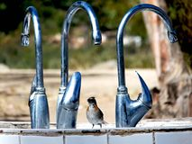 Little bird near of faucets Royalty Free Stock Images