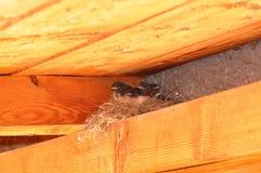 Little bird nest Stock Photo