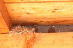 Little bird nest Royalty Free Stock Photography