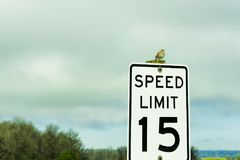 Copyspace little bird on top of sign royalty free stock photo