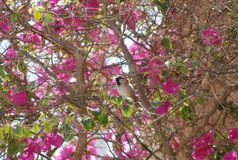 Little bird in planting flowers Royalty Free Stock Photography