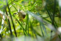 Little bird is playing in tree, Reunion Island. Little bird is playing in tree at Reunion Island Stock Photo