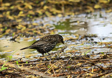 Little bird in a pond Stock Photos