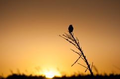 Little bird's silhouette. At sunset Royalty Free Stock Image