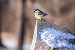 Little bird sitting on a log Royalty Free Stock Photo
