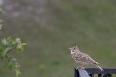 Little bird sitting on railing Stock Image