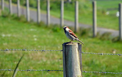 Little bird sitting on wooden stake with barbed wire Stock Photography