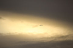 A little bird. Bird on sky background Stock Image