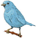 Little bird. A small blue bird sitting on a branch of a tree Stock Photos