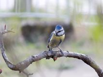 Little bird. Small colorful feathers of birds standing on a tree branch Royalty Free Stock Images