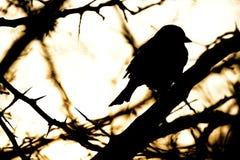 Little bird a Sparrow . Stock Photography