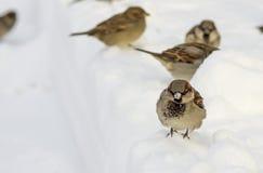 Little bird Royalty Free Stock Photography