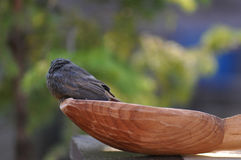 Little bird and spoon Royalty Free Stock Photography