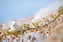 Little bird  in Spring with blossom cherry flower sakura Stock Images