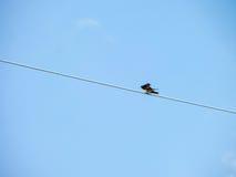 Little bird stand on power elecrtic line Stock Photos