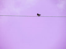 Little bird stand on power elecrtic line Royalty Free Stock Image