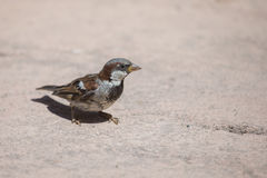 A little bird Royalty Free Stock Photography