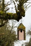 Little bird table on an old mossy tree Stock Image
