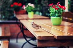 Little bird. On table in a restaurant Stock Photo