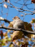 Little bird on tree Royalty Free Stock Images