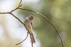 Little bird on a twig Stock Photos