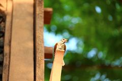 The little bird is on the wood. royalty free stock photo