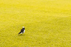A little bird in yellow field stock photo