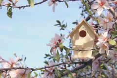 Little Birdhouse In Spring Over Blossom Cherry Tree. Stock Photos