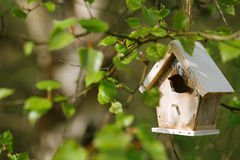 Little Birdhouse in Spring birch leaves Royalty Free Stock Images
