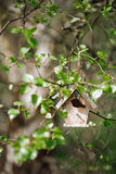 Little Birdhouse in Spring birch leaves Royalty Free Stock Photo
