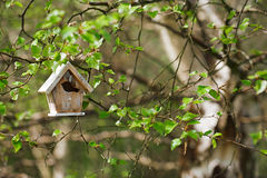 Little Birdhouse in Spring birch leaves Stock Image