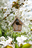 Little Birdhouse in Spring with blossom Stock Photo