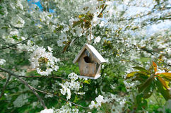 Little Birdhouse in Spring with blossom cherry Royalty Free Stock Image