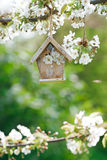 Little Birdhouse in Spring with blossom cherry flower Stock Image