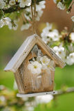 Little Birdhouse in Spring with blossom cherry flower Royalty Free Stock Photos