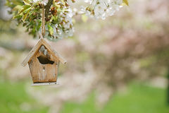 Little Birdhouse in Spring with blossom cherry Royalty Free Stock Images