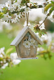 Little Birdhouse in Spring with blossom cherry flower Royalty Free Stock Photo