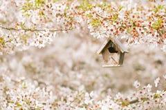 Little Birdhouse in Spring with blossom cherry flower sakura Royalty Free Stock Photo