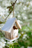 Little Birdhouse in Spring with blossom cherry flower sakura Stock Photography