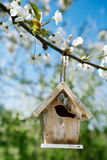 Little Birdhouse in Spring with blossom cherry flower sakura Royalty Free Stock Image