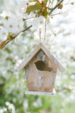 Little Birdhouse in Spring with blossom cherry flower sakura Stock Image