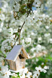 Little Birdhouse in Spring with blossom cherry flower sakura Royalty Free Stock Photography