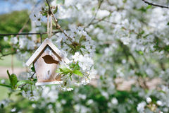 Little Birdhouse in Spring with blossom cherry flower sakura Royalty Free Stock Photo