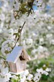Little Birdhouse in Spring with blossom cherry flower sakura Royalty Free Stock Photos