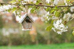 Little Birdhouse in Spring with blossom cherry flower sakura Royalty Free Stock Images