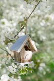 Little Birdhouse in Spring with blossom flower Royalty Free Stock Photography