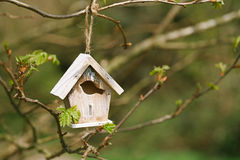 Little Birdhouse in Spring new leaves Royalty Free Stock Photo