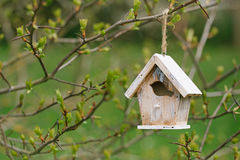 Little Birdhouse in Spring new leaves Royalty Free Stock Images