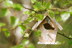 Little Birdhouse in Spring new leaves Stock Photo