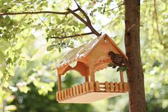 Birdhouse on the tree royalty free stock images
